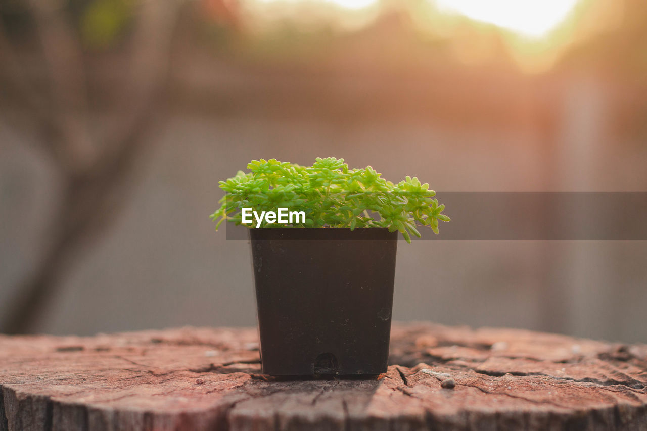 growth, plant, close-up, nature, potted plant, day, focus on foreground, no people, outdoors, selective focus, wood - material, green color, seedling, beginnings, freshness, leaf, food and drink, table, plant part, beauty in nature, gardening