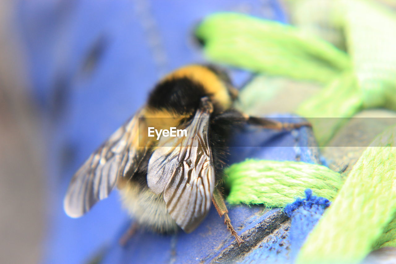 one animal, animal themes, insect, animals in the wild, selective focus, animal wildlife, no people, close-up, blue, day, outdoors, nature