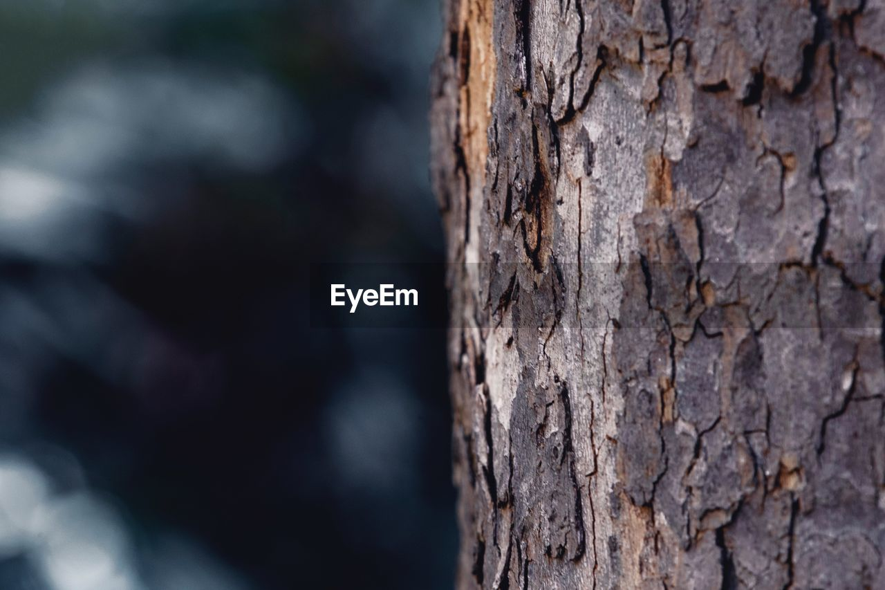 textured, close-up, focus on foreground, tree trunk, trunk, rough, tree, plant, no people, nature, day, plant bark, outdoors, wood - material, pattern, selective focus, backgrounds, natural pattern, bark, beauty in nature, textured effect
