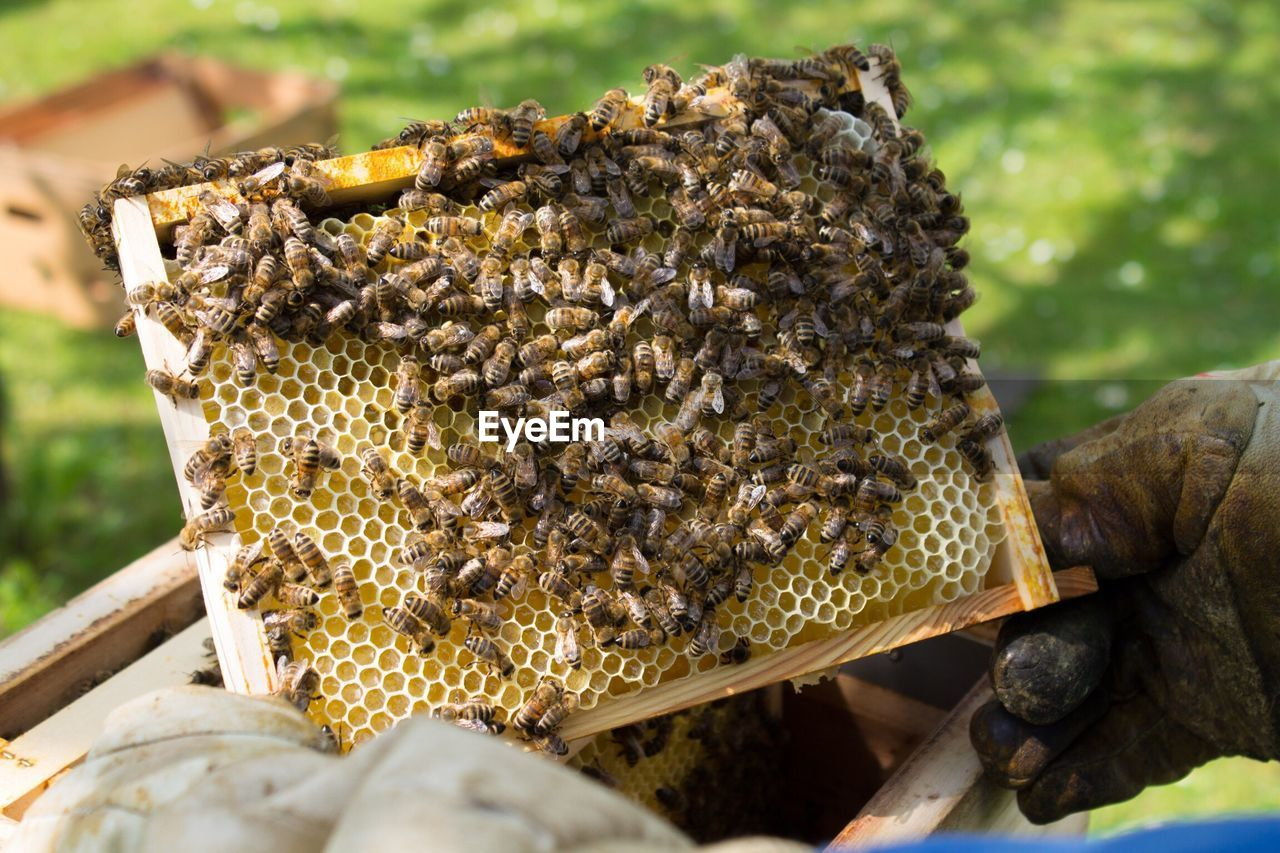 High Angle View Of Beekeeper Holding Beehive On Field