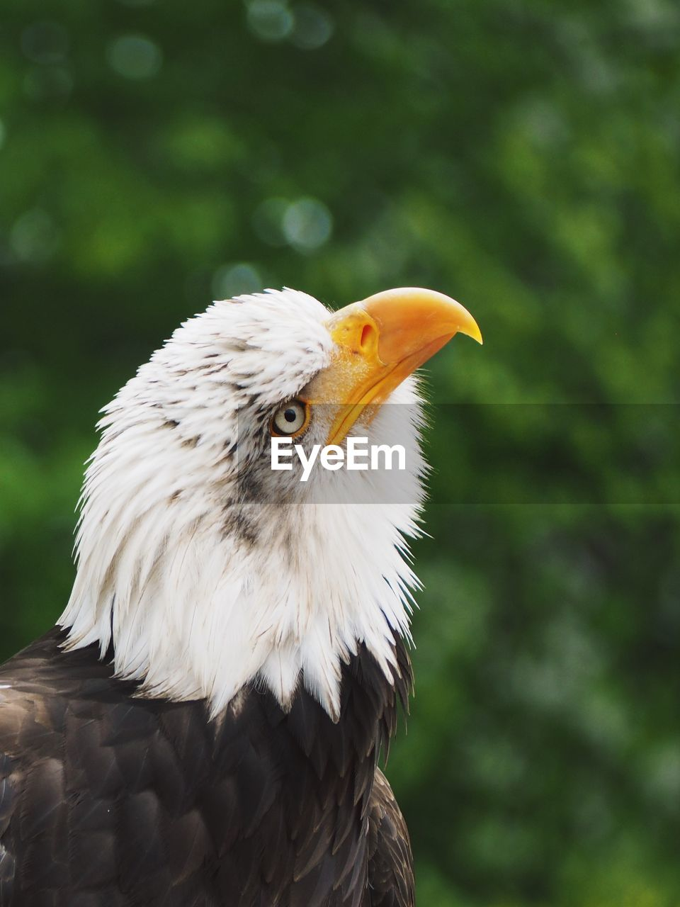 bird, animal, vertebrate, one animal, animal themes, focus on foreground, bird of prey, animals in the wild, animal wildlife, eagle, close-up, day, no people, beak, looking away, animal body part, looking, nature, eagle - bird, animal head, outdoors, animal eye, profile view