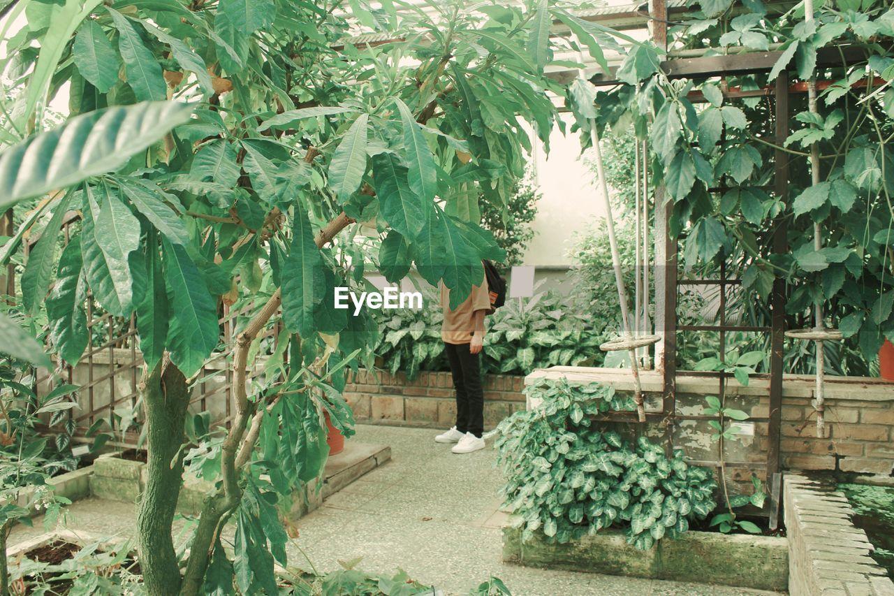 PLANTS IN YARD