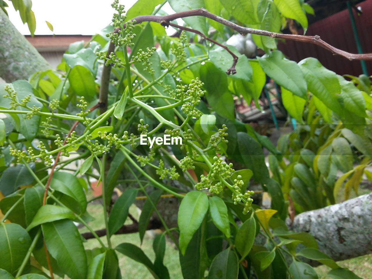 growth, green color, leaf, plant, nature, day, freshness, outdoors, close-up, beauty in nature, no people, food, fragility