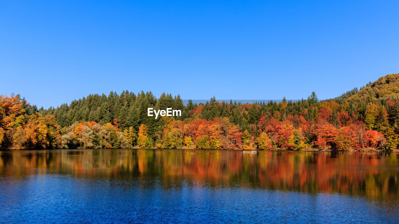 Scenic View Of Lake By Trees In Forest Against Clear Sky