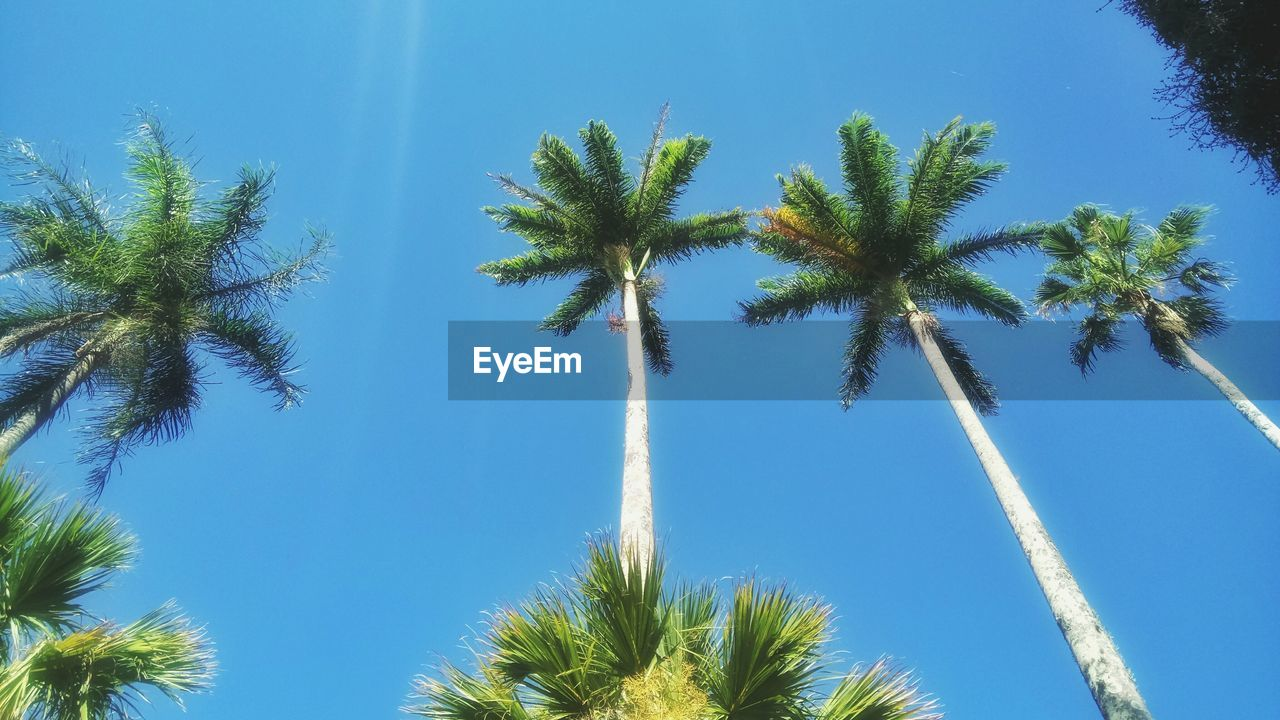 palm tree, tree, low angle view, blue, nature, beauty in nature, growth, day, sky, tree trunk, no people, outdoors, clear sky, scenics, vapor trail, contrail