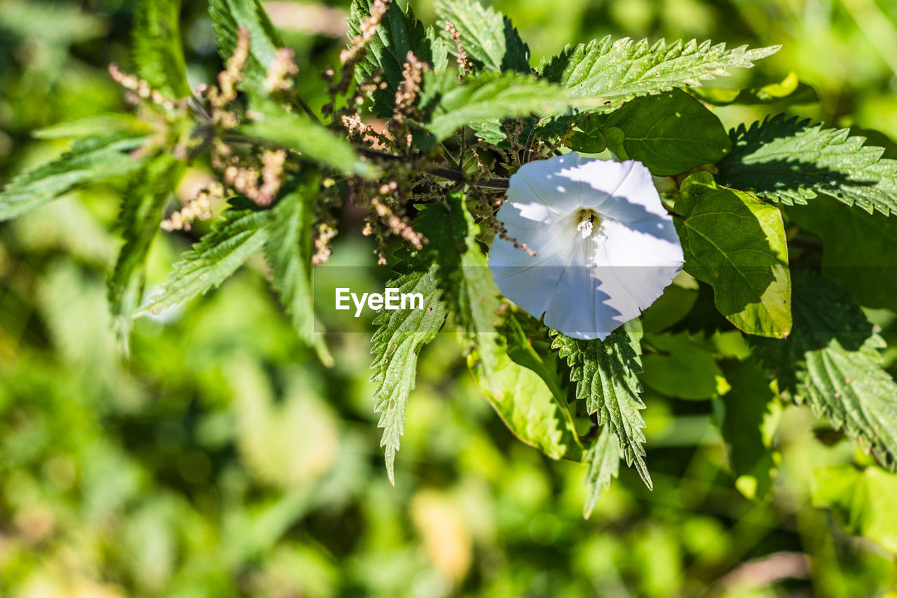 plant, beauty in nature, growth, flower, flowering plant, fragility, vulnerability, freshness, green color, close-up, petal, leaf, flower head, plant part, nature, day, inflorescence, no people, selective focus, sunlight