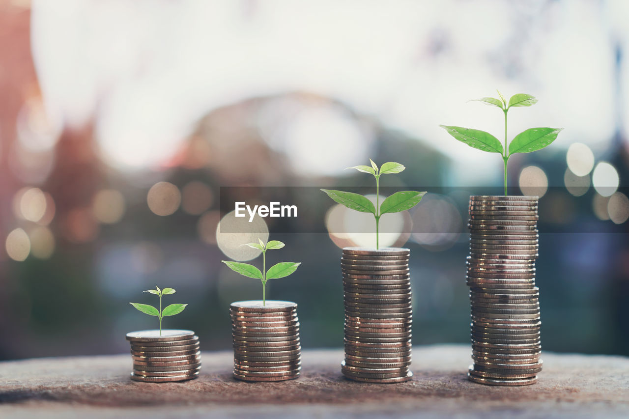 finance, savings, wealth, growth, currency, coin, business, plant, investment, nature, leaf, plant part, business finance and industry, stack, beginnings, seedling, close-up, new life, finance and economy, focus on foreground, development, no people, sapling, gardening, outdoors, planting, making money, economy