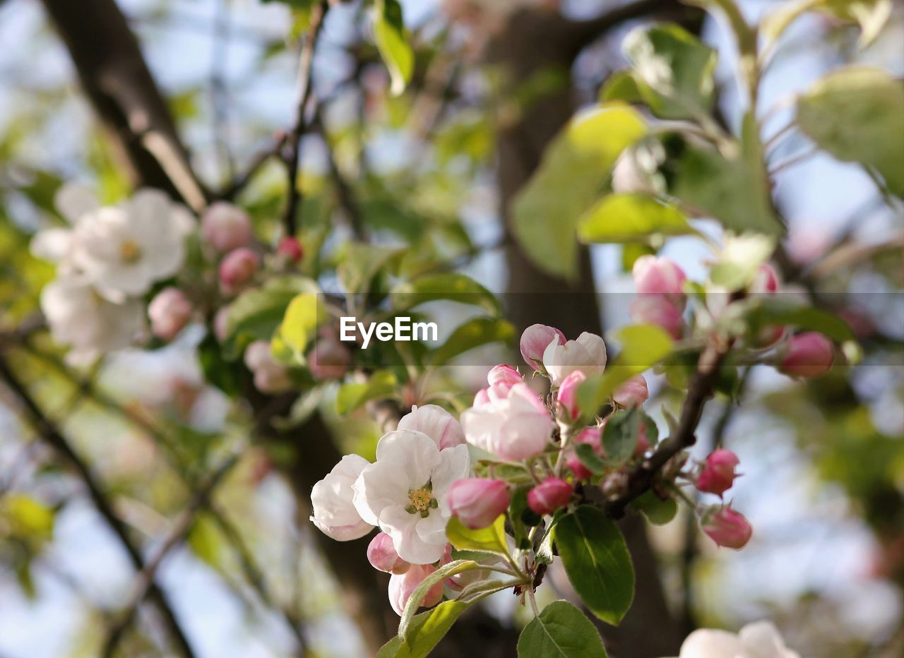 flower, fragility, growth, beauty in nature, nature, branch, blossom, tree, petal, springtime, freshness, botany, day, no people, pink color, outdoors, close-up, flower head, blooming