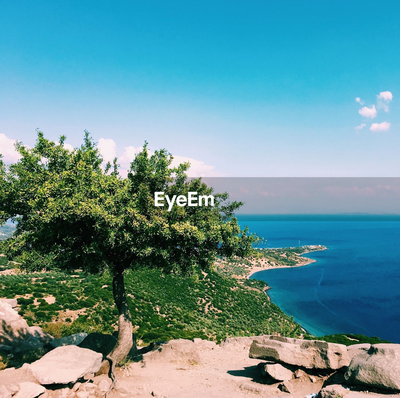 sky, plant, tree, sea, water, beauty in nature, scenics - nature, tranquil scene, tranquility, land, nature, beach, growth, blue, day, no people, horizon, green color, horizon over water, outdoors