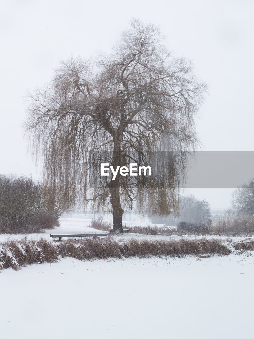tree, winter, cold temperature, snow, bare tree, nature, cold, tranquility, branch, landscape, tranquil scene, beauty in nature, lone, day, outdoors, no people, scenics, tree trunk, clear sky, sky