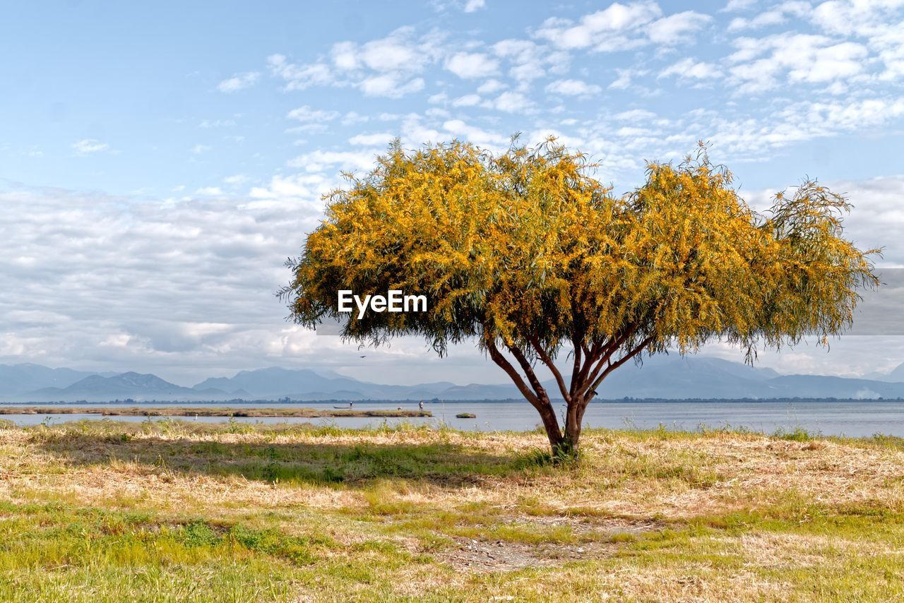 AUTUMN TREE ON FIELD