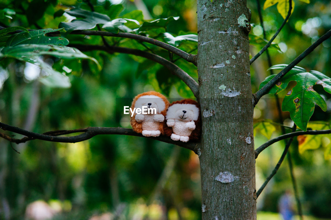 Close-up of stuffed toy on branch