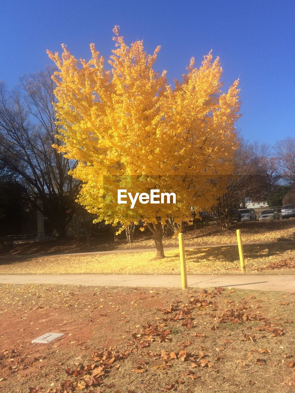 tree, autumn, change, nature, beauty in nature, leaf, tranquility, day, no people, outdoors, tranquil scene, scenics, field, landscape, sky, growth, yellow, branch, clear sky