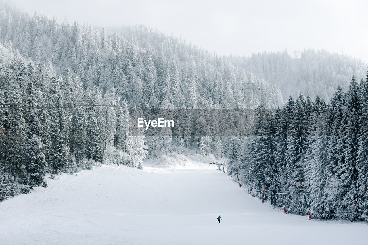 snow, winter, cold temperature, plant, tree, beauty in nature, scenics - nature, mountain, nature, land, day, white color, non-urban scene, skiing, tranquility, winter sport, covering, tranquil scene, sport, outdoors, pine tree, snowcapped mountain