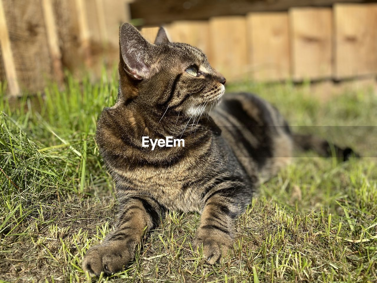 CLOSE-UP OF A CAT LOOKING AWAY ON FIELD