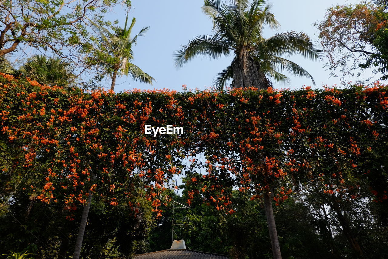 tree, growth, beauty in nature, nature, outdoors, palm tree, no people, day, low angle view, sky, scenics, branch, freshness