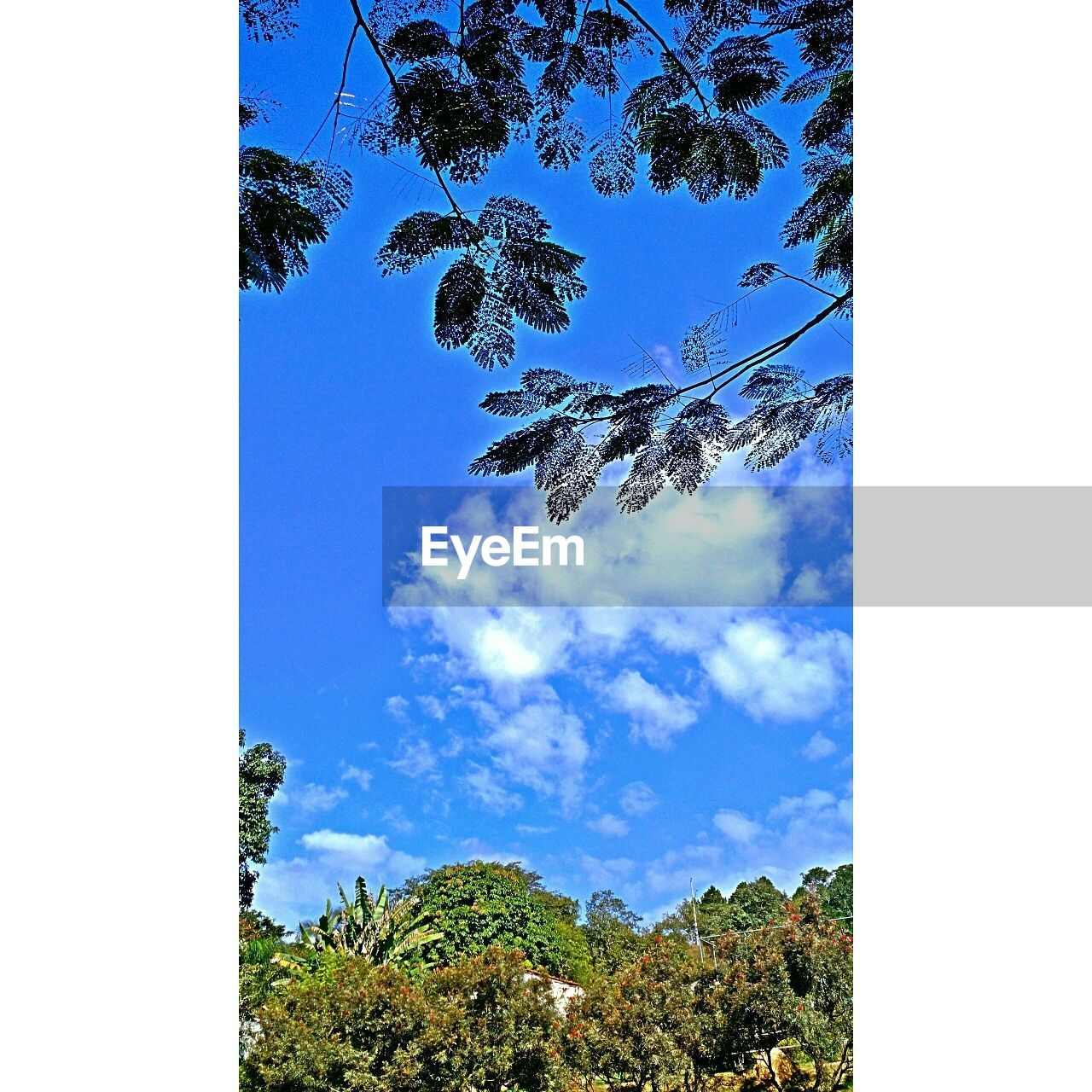 tree, blue, sky, day, nature, no people, low angle view, beauty in nature, growth, outdoors, tree trunk, clear sky, branch