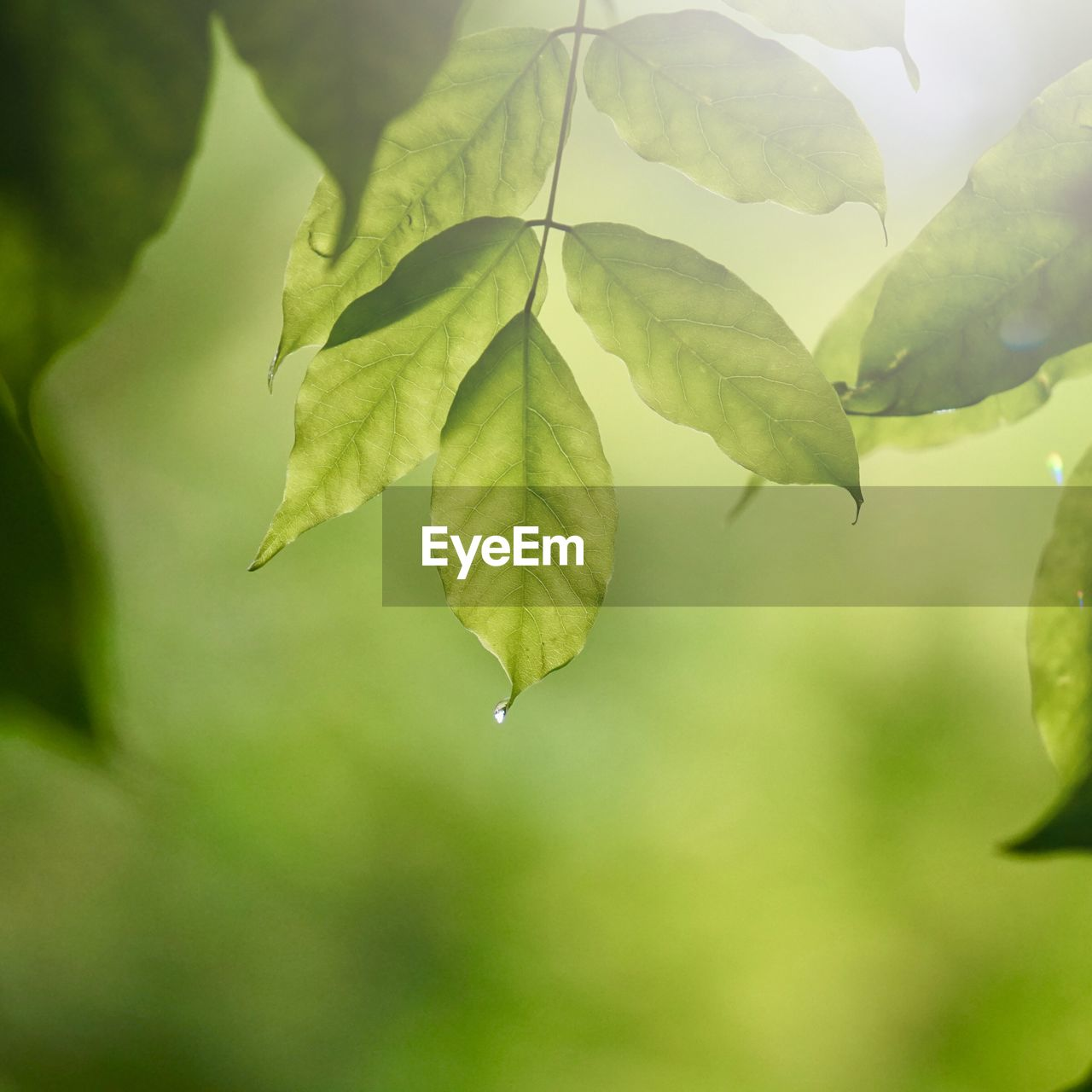 leaf, plant part, growth, plant, green color, close-up, beauty in nature, day, no people, focus on foreground, nature, tranquility, selective focus, outdoors, freshness, leaves, vulnerability, fragility, plant stem, water