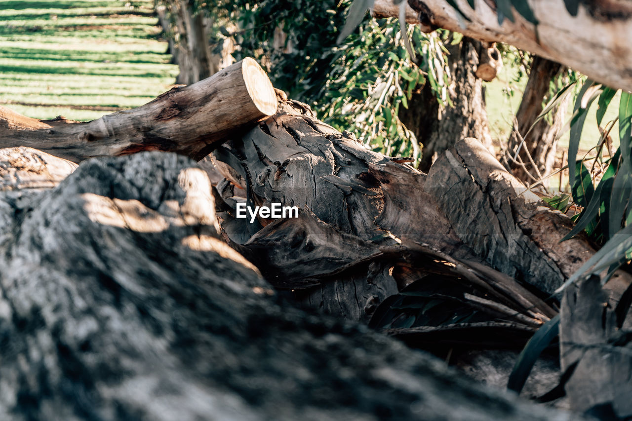 tree, wood - material, selective focus, nature, no people, plant, close-up, log, timber, day, wood, land, tree trunk, plant part, forest, trunk, animal themes, animal, leaf, animal wildlife, outdoors, bark, driftwood