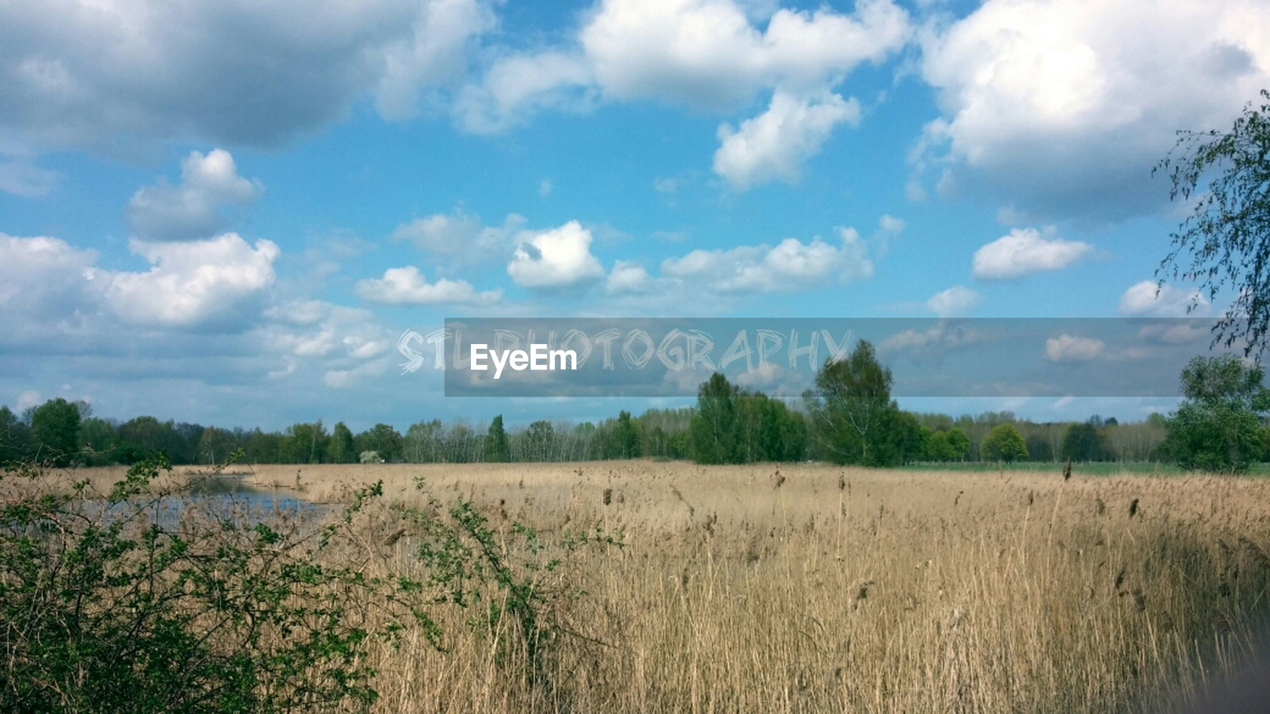 sky, tranquil scene, tranquility, cloud - sky, scenics, landscape, field, beauty in nature, cloud, grass, nature, growth, cloudy, tree, plant, rural scene, non-urban scene, idyllic, day, horizon over land