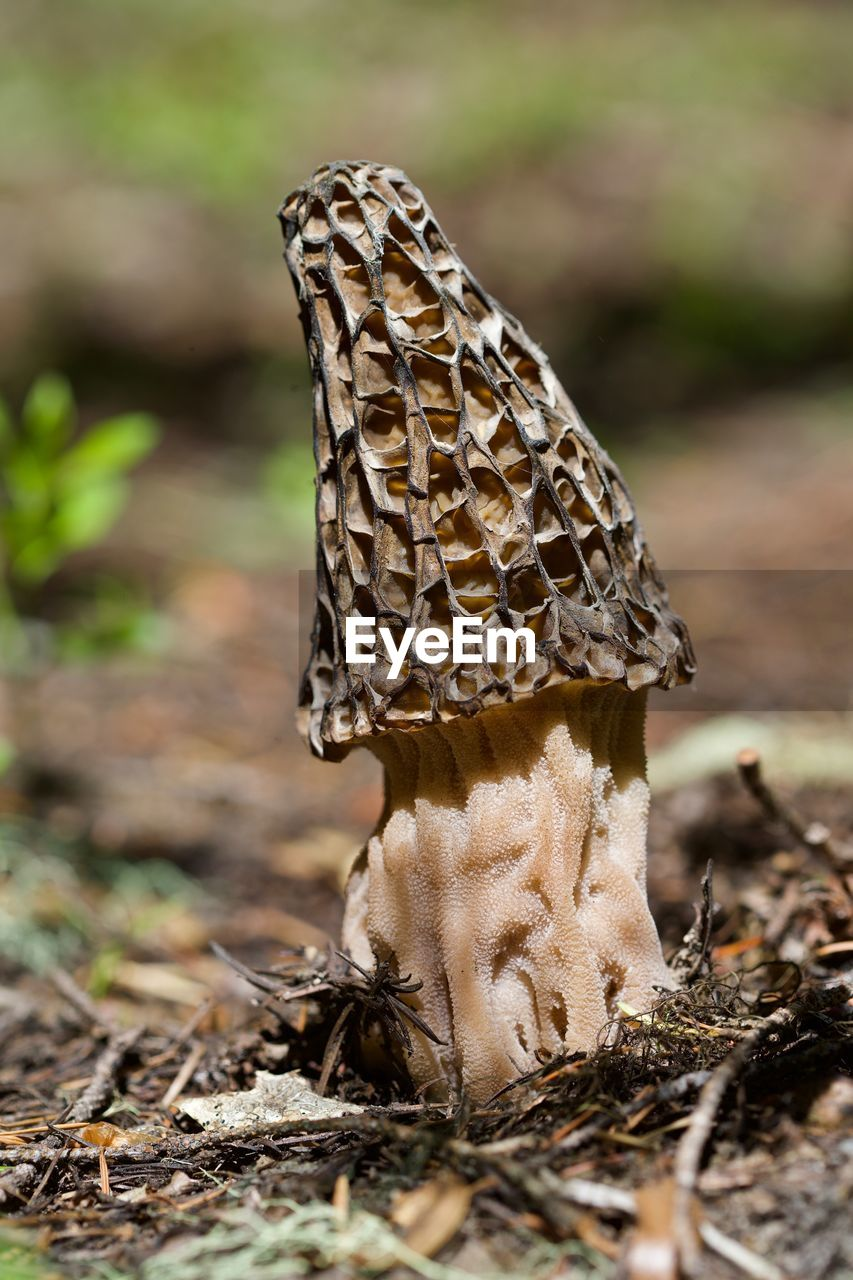 land, close-up, field, day, one animal, selective focus, no people, nature, animal wildlife, animal themes, focus on foreground, animal, animals in the wild, dry, food, outdoors, plant, beauty in nature, fungus, mushroom, toadstool