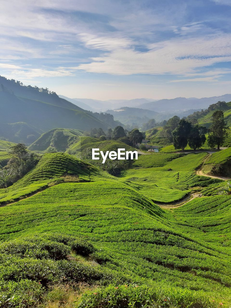 scenics - nature, landscape, beauty in nature, tranquil scene, tranquility, environment, green color, sky, plant, cloud - sky, mountain, land, growth, non-urban scene, no people, agriculture, nature, field, rural scene, tree, mountain range, outdoors, tea crop, rolling landscape, plantation