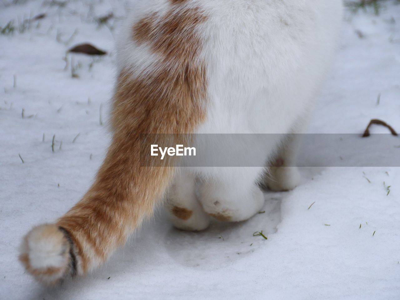 Cropped image of cat on snow field