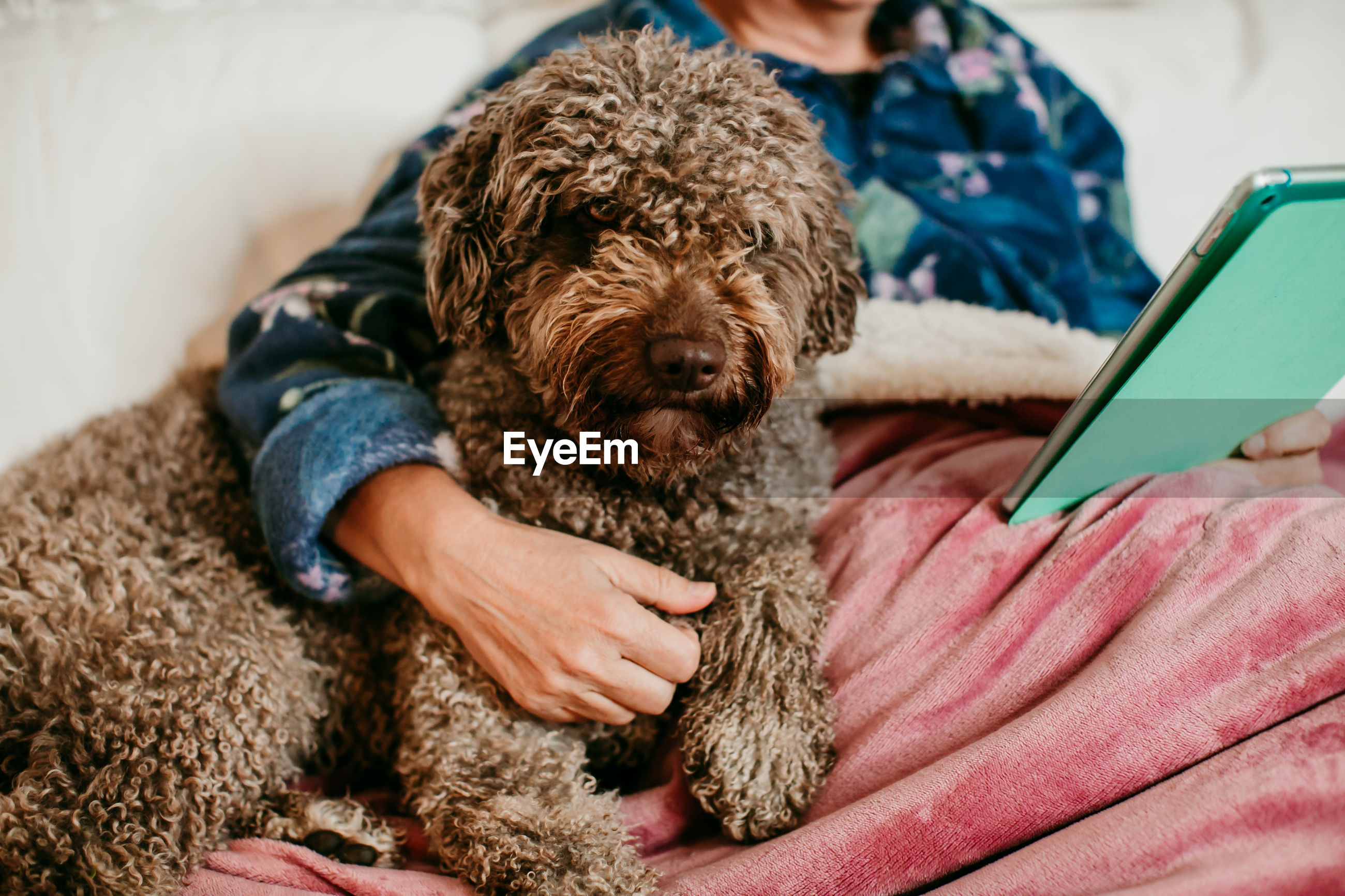 Midsection of woman holding dog while using digital tablet on sofa
