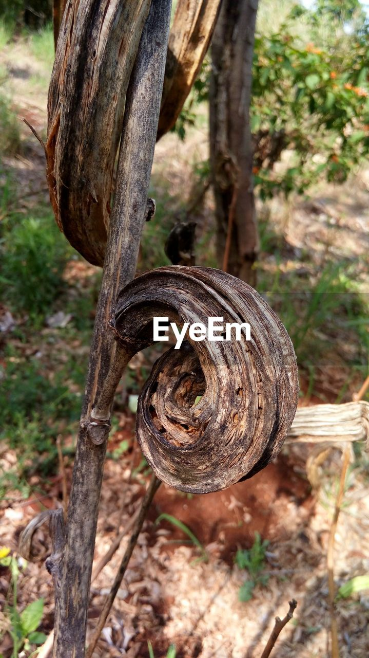 focus on foreground, day, tree, close-up, plant, no people, nature, tree trunk, land, trunk, wood - material, outdoors, wheel, selective focus, metal, rusty, field, sunlight, branch, forest