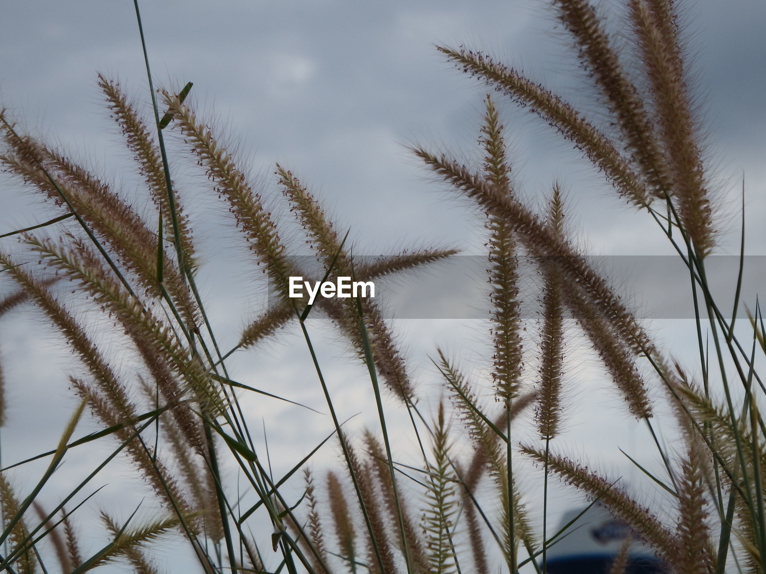 Low angle view of stalks on field against sky