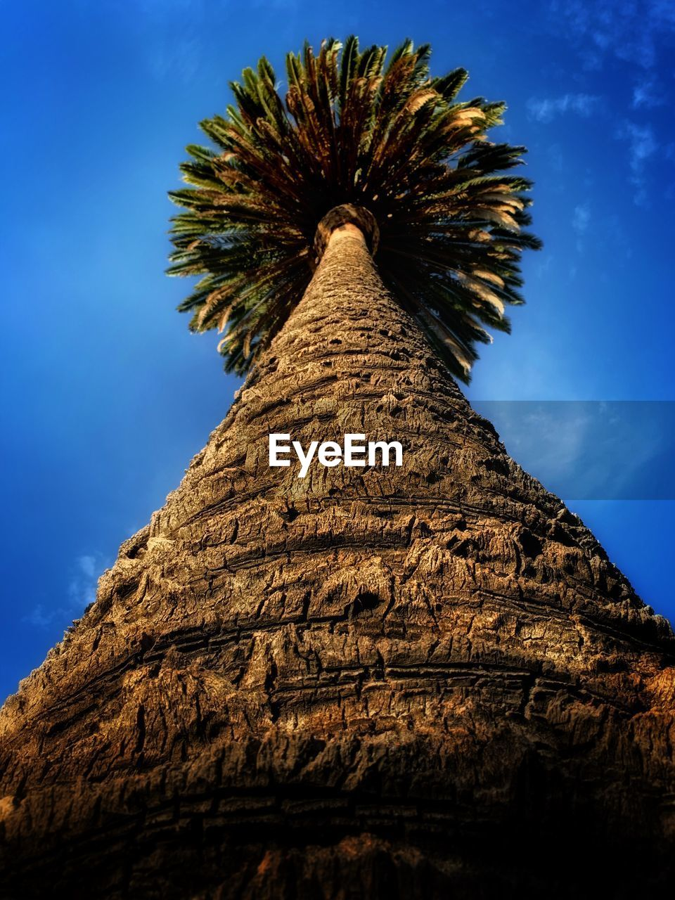 low angle view, sky, no people, nature, tree, tall - high, tree trunk, trunk, plant, day, blue, outdoors, growth, beauty in nature, wood - material, palm tree, tropical climate, architecture, bark, textured, directly below, palm leaf