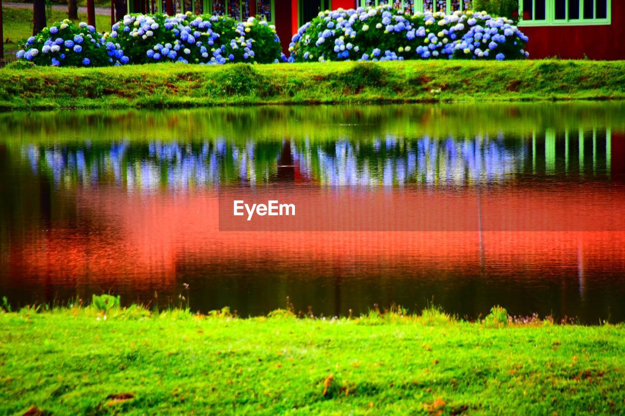 reflection, nature, beauty in nature, grass, growth, no people, tranquility, flower, green color, outdoors, water, scenics, lake, day, tree, freshness