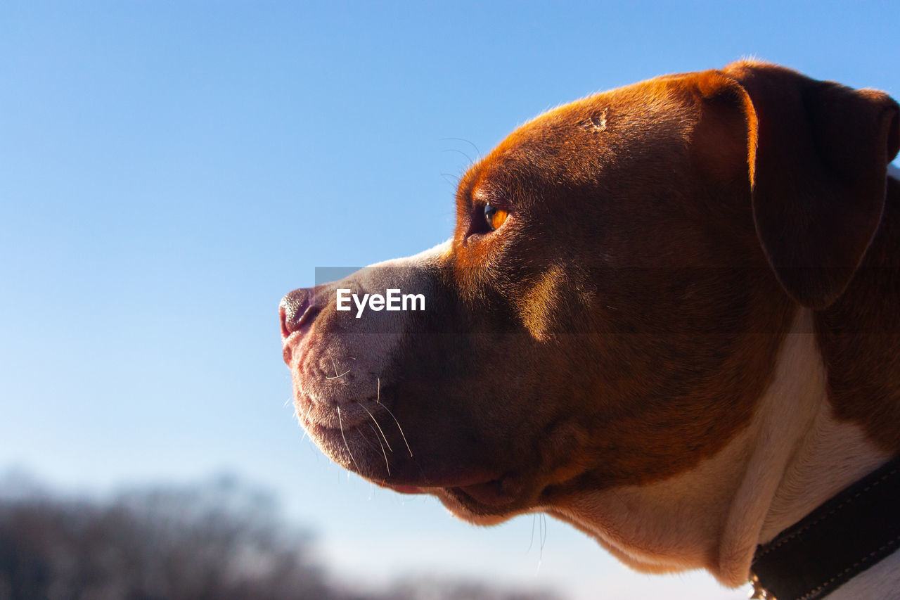 Close-up of dog looking away against sky