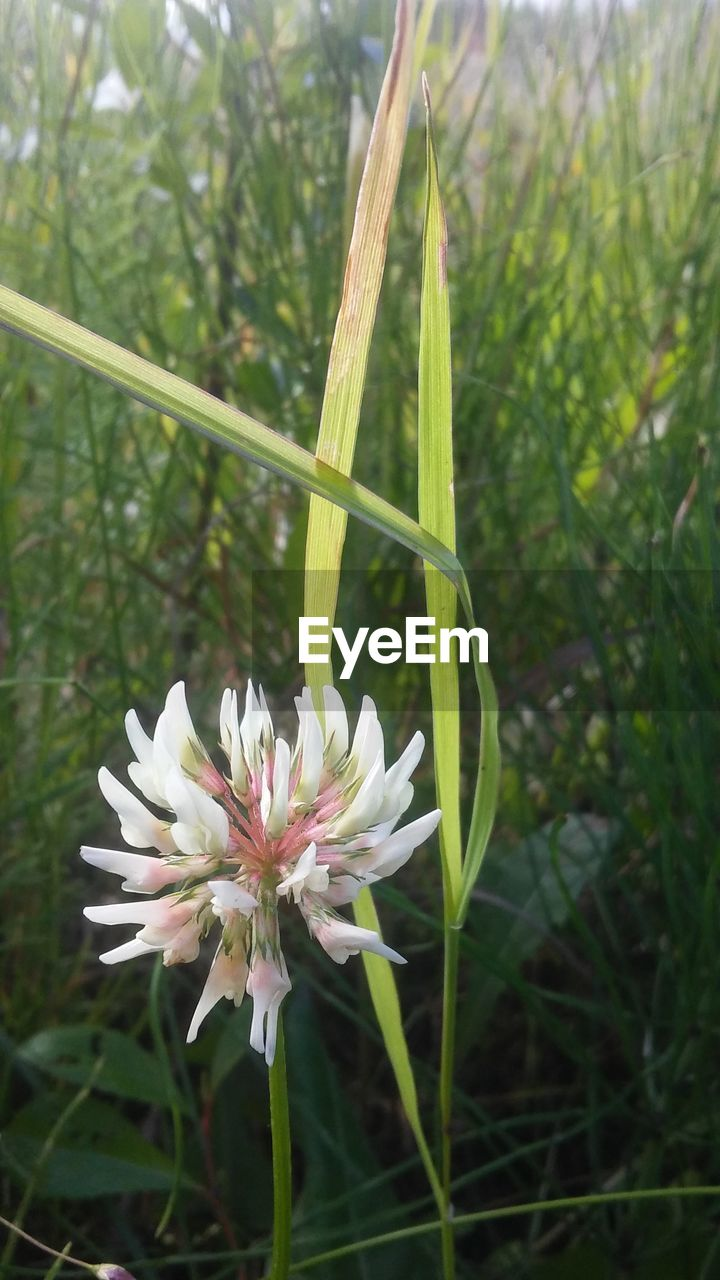 plant, flowering plant, flower, freshness, growth, beauty in nature, fragility, vulnerability, close-up, nature, petal, day, flower head, inflorescence, focus on foreground, no people, green color, plant stem, field, outdoors, pollen, blade of grass