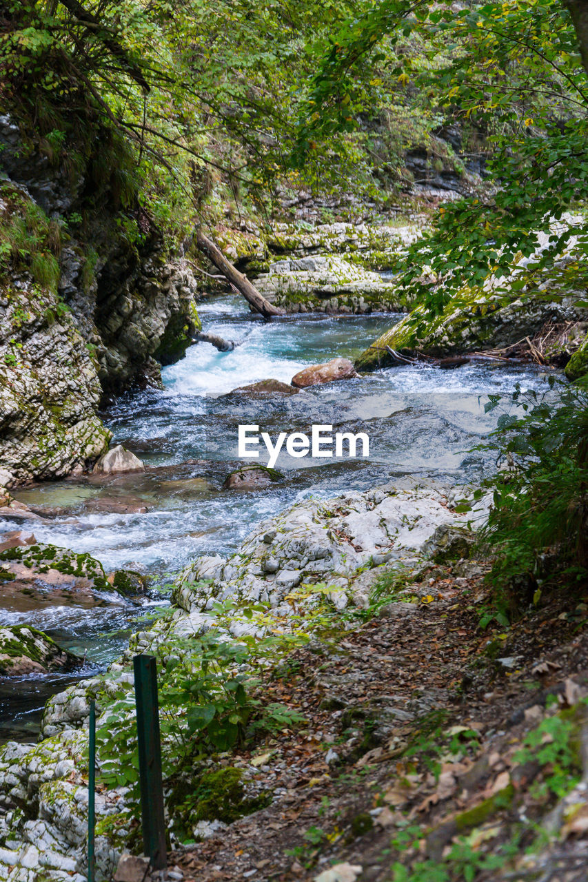 water, plant, beauty in nature, motion, flowing water, nature, no people, tree, forest, scenics - nature, land, day, solid, rock, river, flowing, growth, tranquility, rock - object, outdoors, stream - flowing water