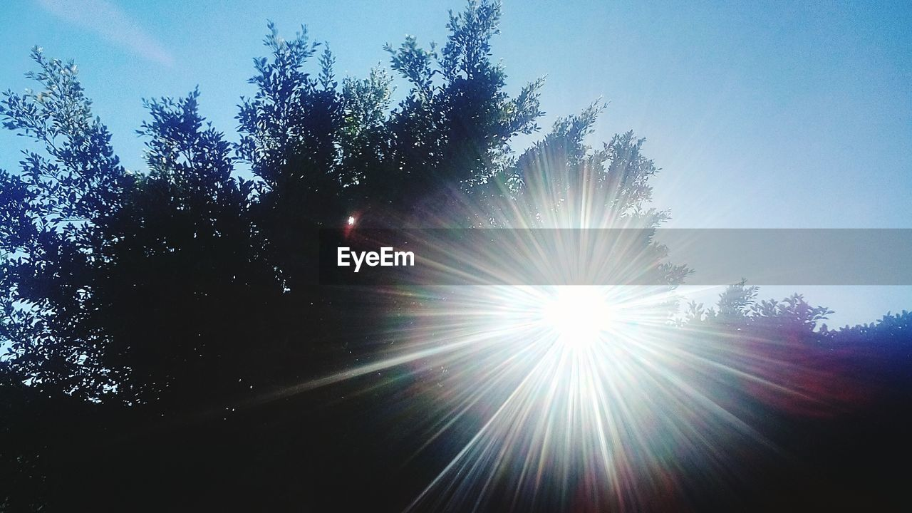 sunbeam, low angle view, lens flare, sunlight, tree, no people, nature, outdoors, sun, growth, sky, day, beauty in nature