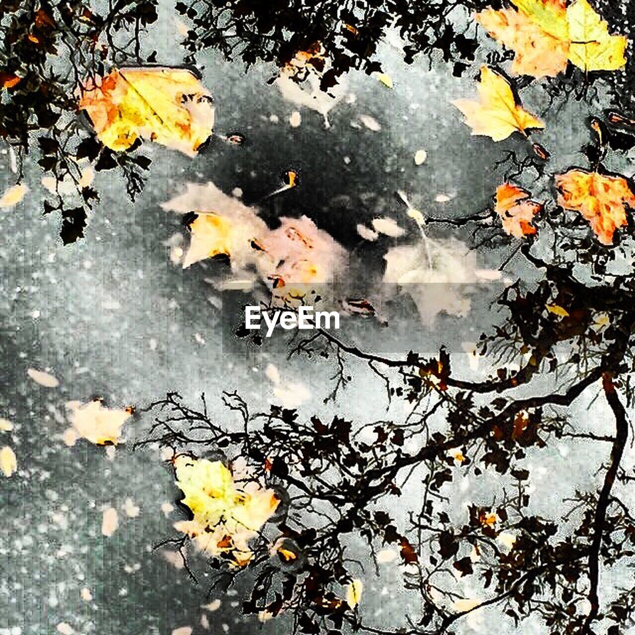 leaf, autumn, nature, tree, fragility, change, water, no people, beauty in nature, flower, outdoors, branch, day, yellow, growth, close-up, maple, puddle, freshness