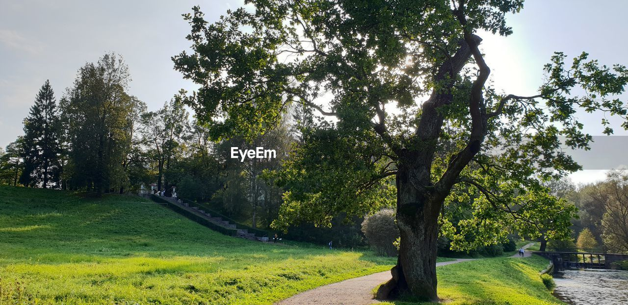 plant, tree, nature, green color, grass, growth, sky, park, no people, beauty in nature, tranquility, landscape, tranquil scene, field, land, day, scenics - nature, outdoors, park - man made space, environment, treelined