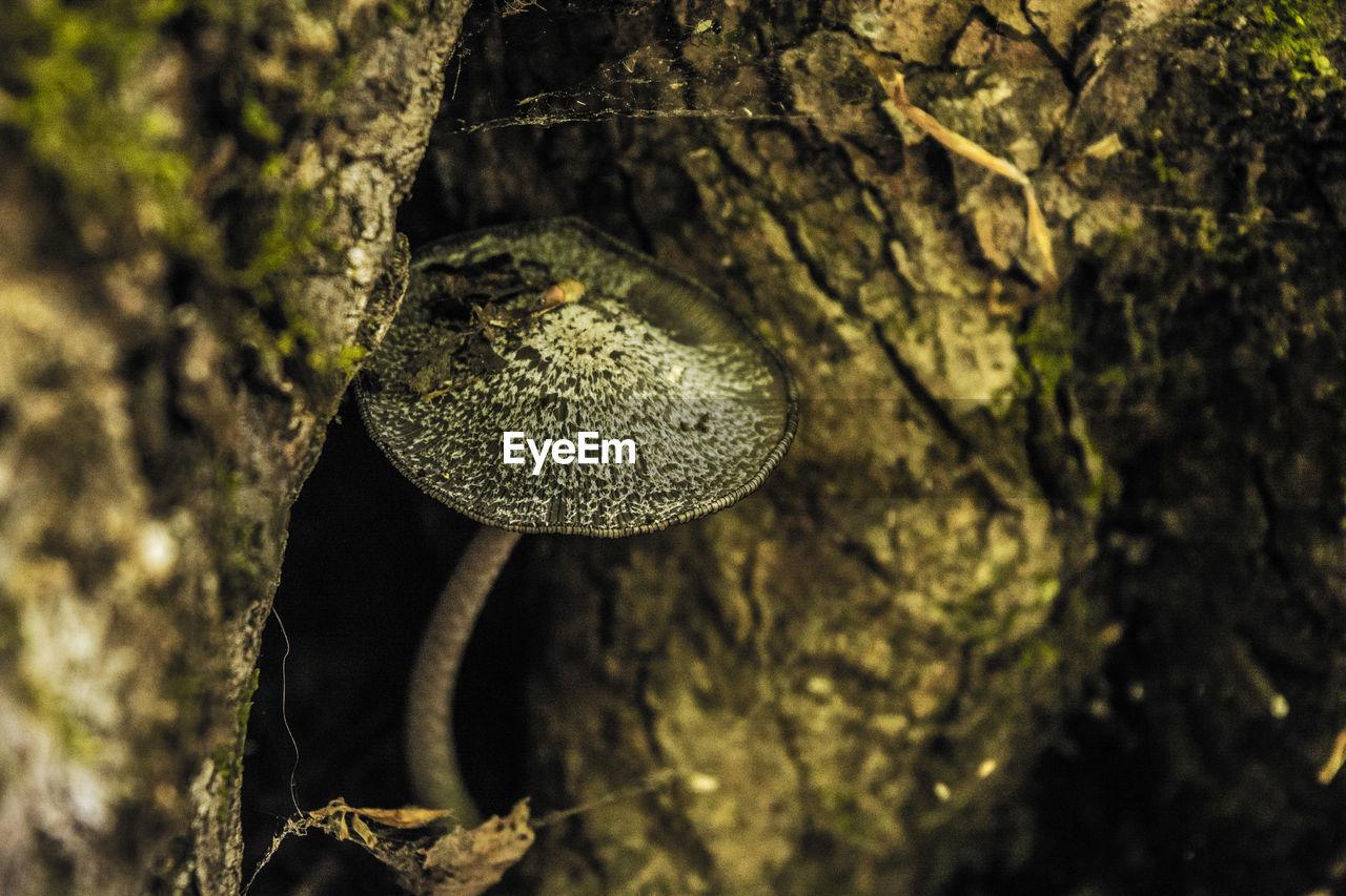 Close-up of mushroom on tree