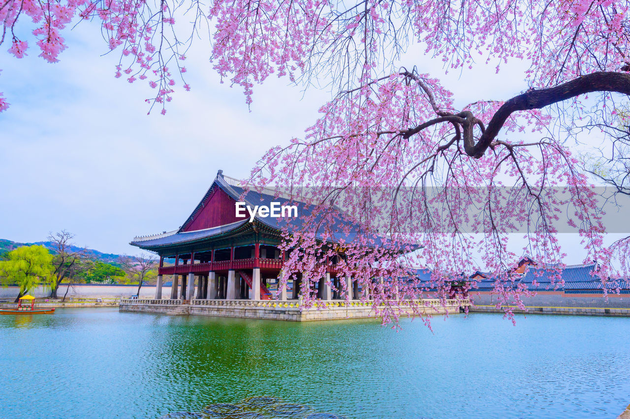 tree, water, plant, built structure, architecture, waterfront, nature, sky, flower, growth, flowering plant, building exterior, beauty in nature, no people, lake, cherry blossom, branch, blossom, day, springtime, outdoors, cherry tree