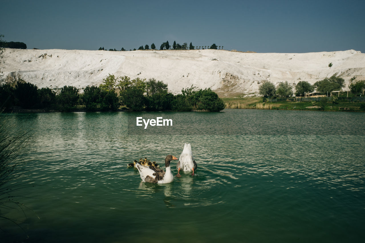 VIEW OF A DOG SWIMMING IN LAKE