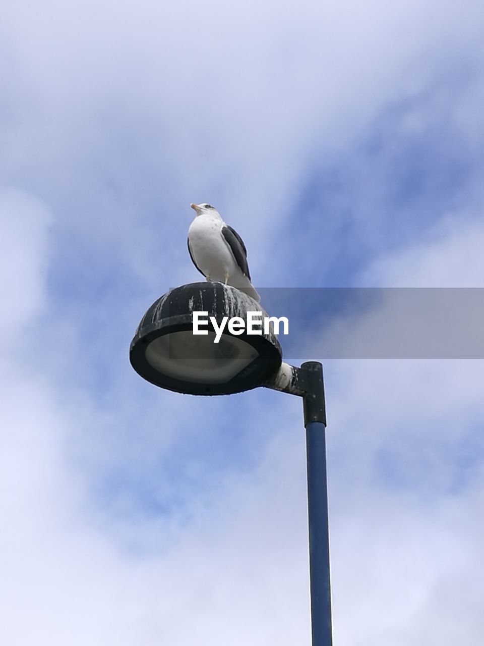 cloud - sky, low angle view, sky, bird, vertebrate, animal wildlife, animals in the wild, animal themes, animal, one animal, perching, street light, street, lighting equipment, day, no people, nature, seagull, outdoors, technology, electrical equipment