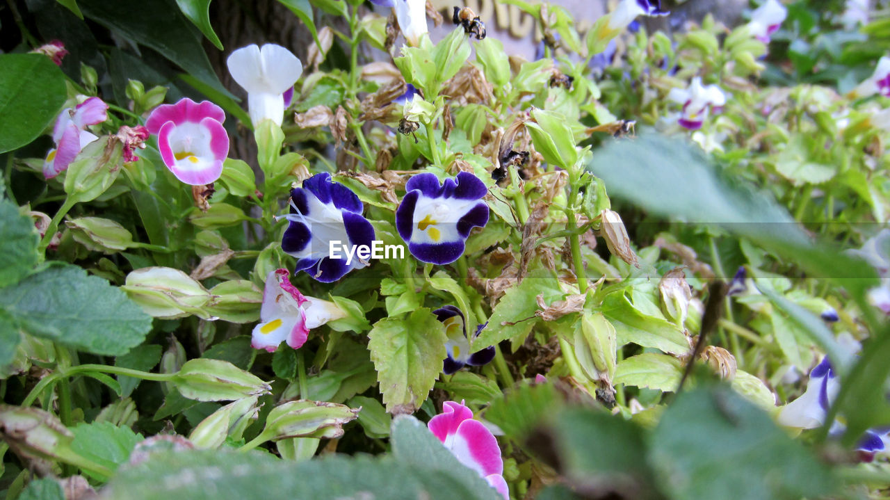 growth, plant, flower, purple, nature, fragility, leaf, outdoors, no people, day, beauty in nature, petal, green color, freshness, blooming, close-up, flower head, animal themes