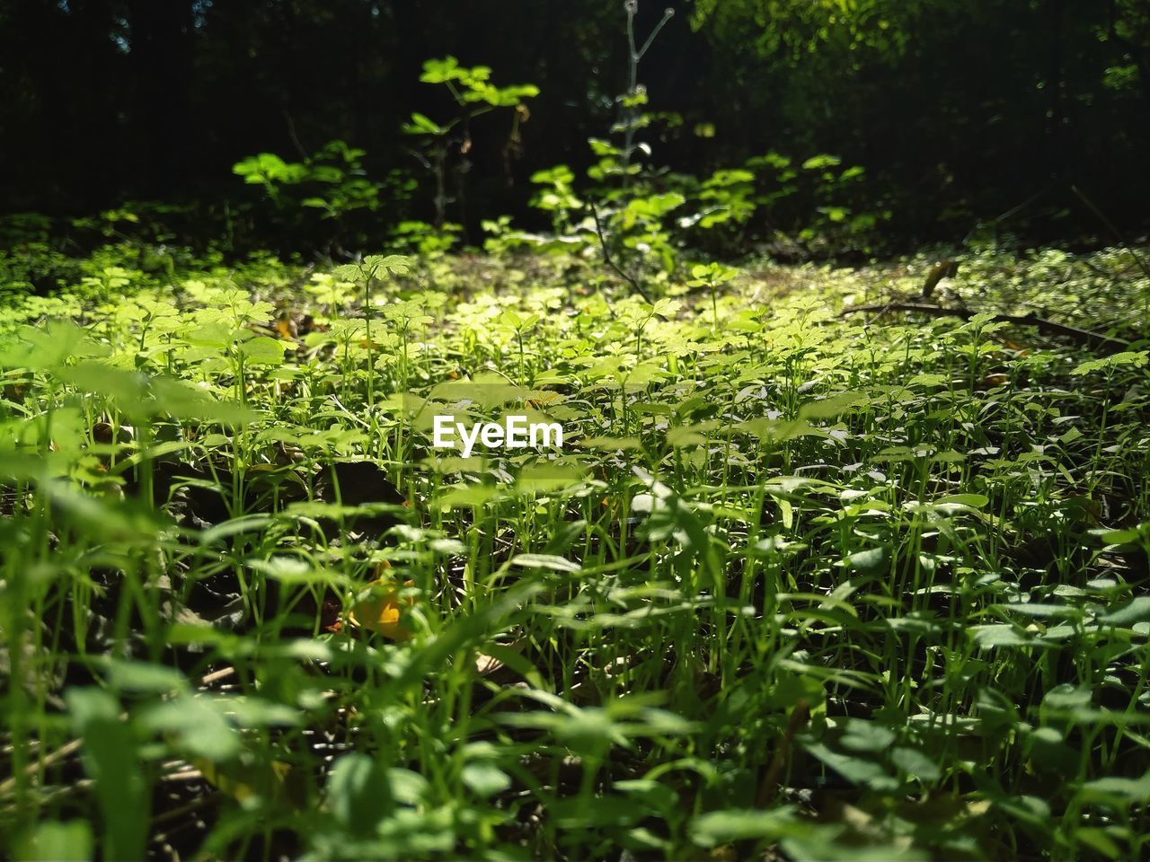 plant, growth, selective focus, beauty in nature, green color, nature, tranquility, no people, land, day, outdoors, freshness, plant part, water, flower, field, leaf, sunlight, vulnerability, close-up, leaves