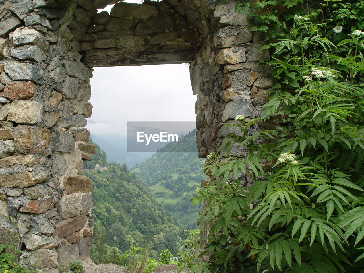 SCENIC VIEW OF MOUNTAINS AGAINST TREES