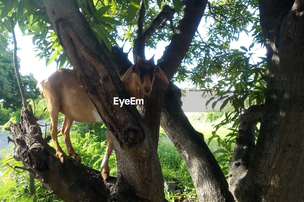 tree, plant, tree trunk, trunk, nature, animal wildlife, mammal, animal, animal themes, branch, day, land, forest, animals in the wild, no people, vertebrate, one animal, growth, outdoors, low angle view, herbivorous