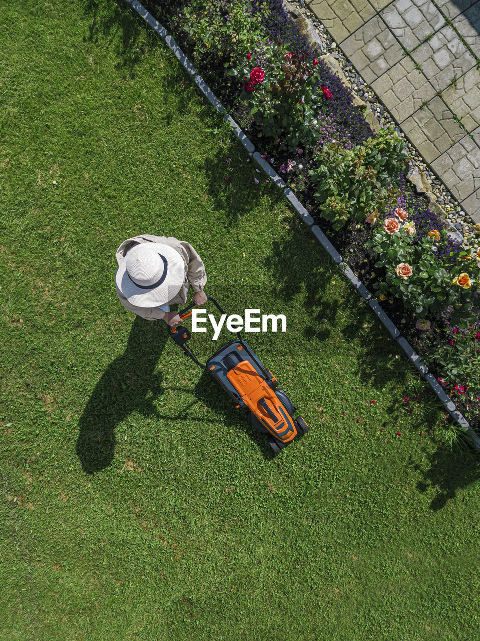 HIGH ANGLE VIEW OF FLOWER ON FIELD BY LAWN