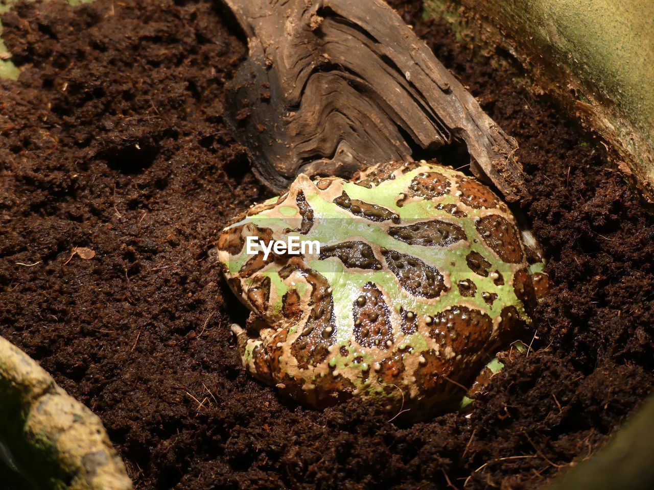 close-up, no people, day, nature, plant, dirt, land, field, high angle view, growth, selective focus, sunlight, leaf, outdoors, plant part, animal themes, brown, tree, animal wildlife, animal, mud
