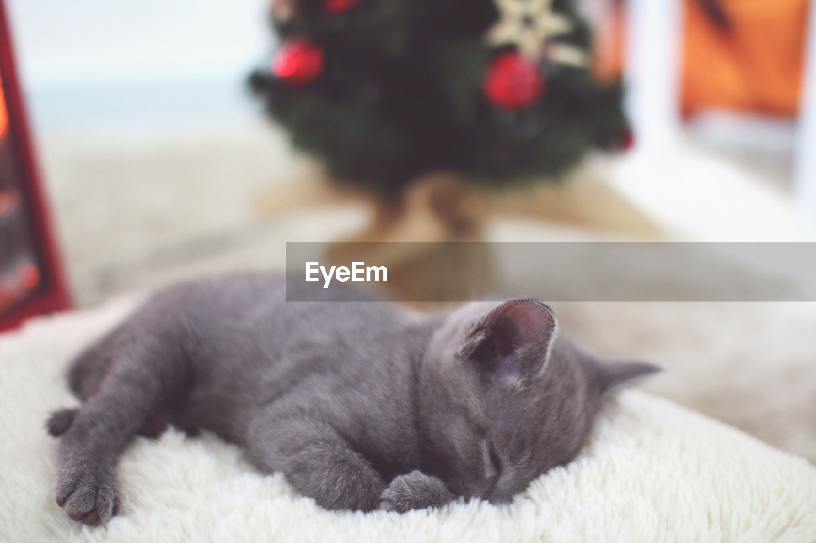 Close-up of cat sleeping on rug at home