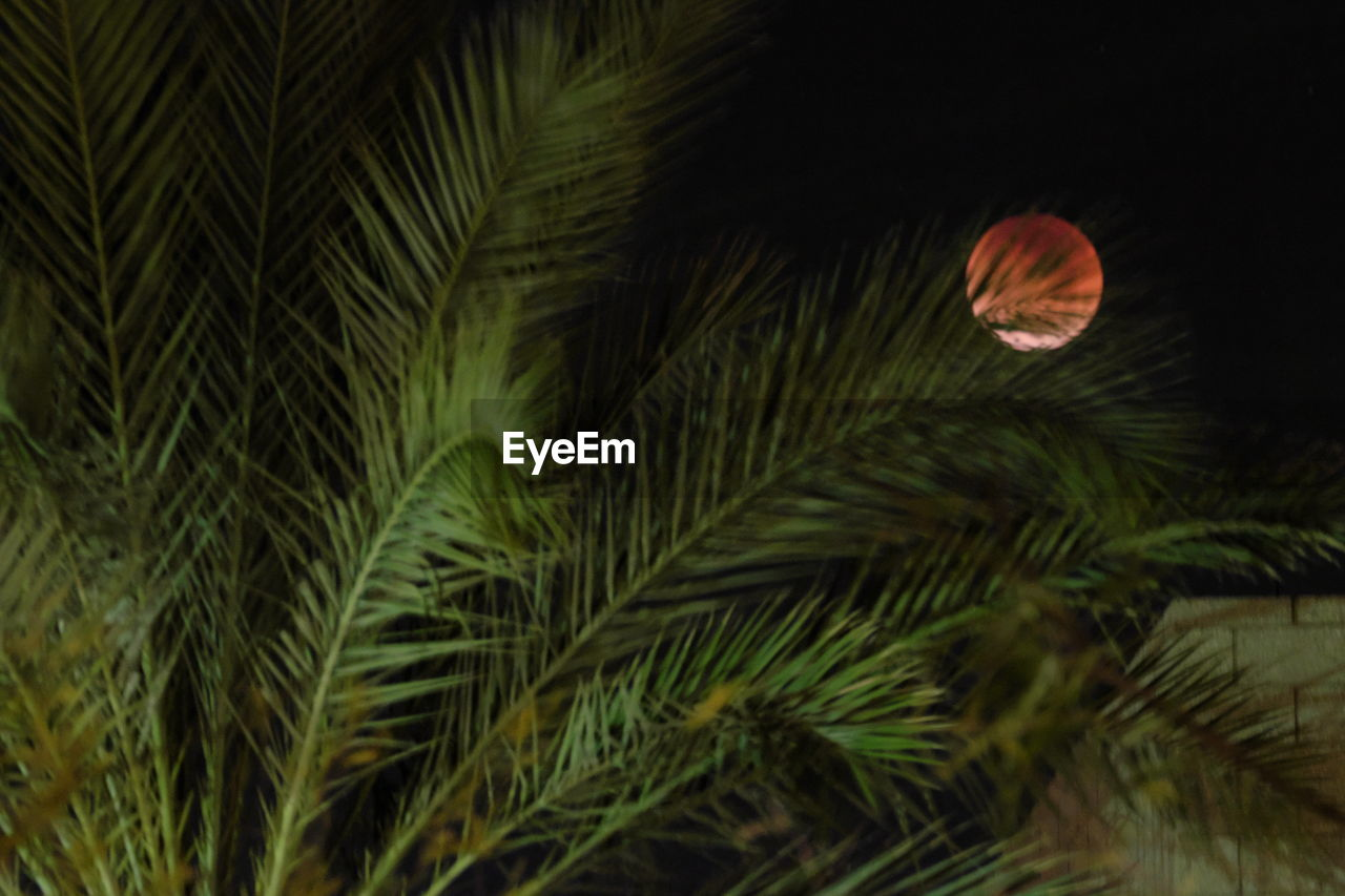 growth, nature, night, plant, no people, green color, leaf, beauty in nature, tree, close-up, outdoors, freshness